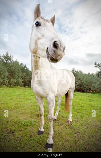 Picture of funny horse, shallow depth of field. - Stock Image