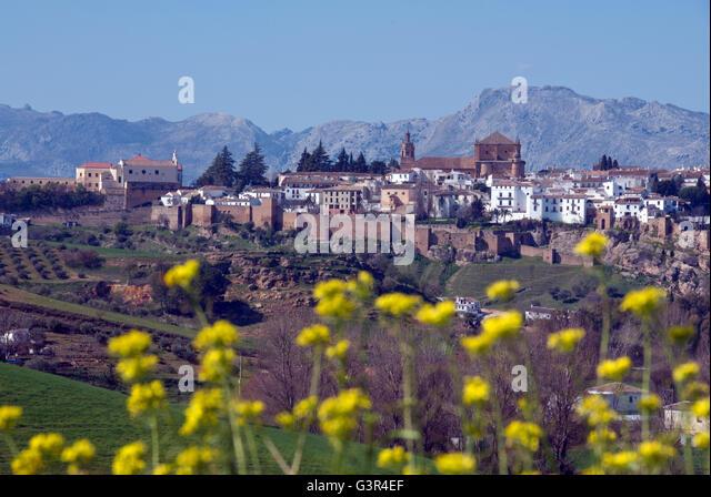 Ronda, Malaga Province, Andalucia. Spain inland Costa del Sol, wild flowers, Sierrania de Ronda mountain range - Stock Image
