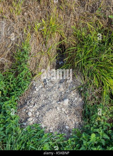 Rabbit hole opening with fresh earth. - Stock Image