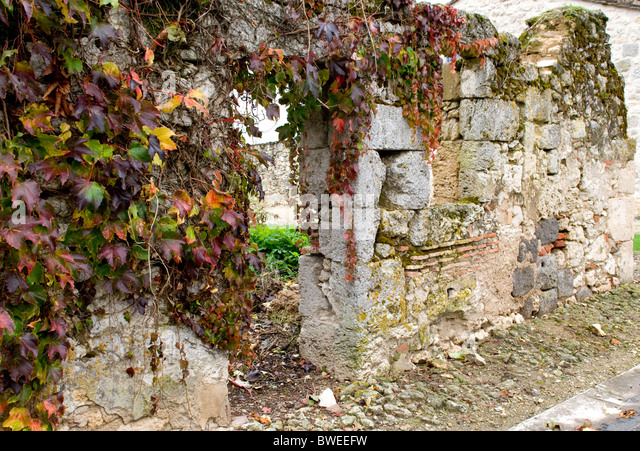 Ruined house overcome by creeper. - Stock Image