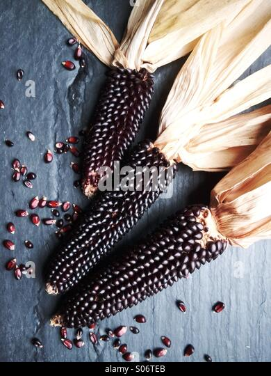 Dakota black heirloom popcorn. - Stock Image