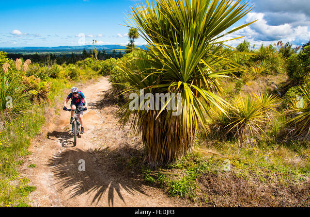 Mountain biker on the Timber Trail in Pureora Forest Park North Island New Zealand - Stock Image