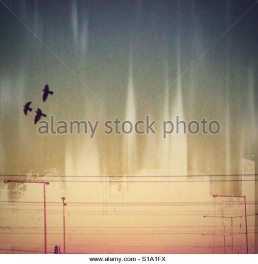 Fly away' - Stock Image
