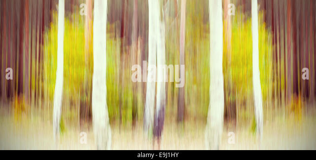 Abstract motion blurred trees in a forest. - Stock Image