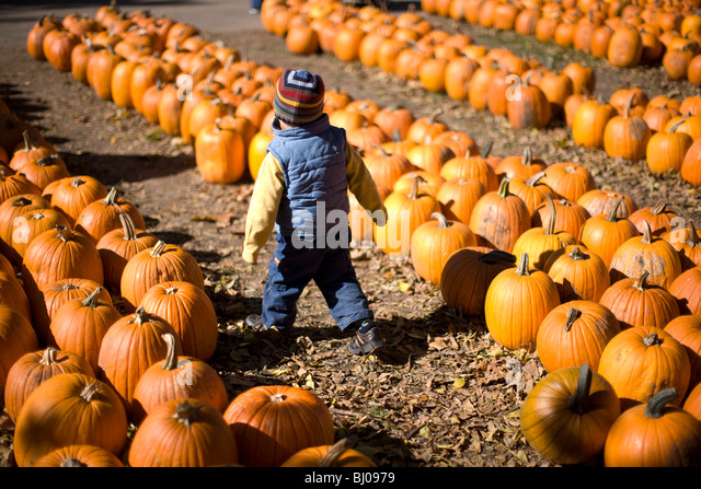 Young boy at a pumpkin patch. - Stock Image