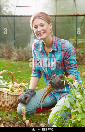 Woman in Garden Digging up Parsnips - Stock Image