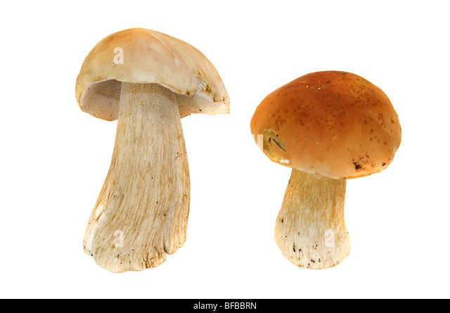 mushrooms isolated on white background - Stock Image