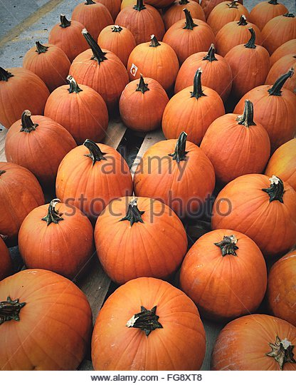 High Angle View Of Pumpkins At Market Stall - Stock Image
