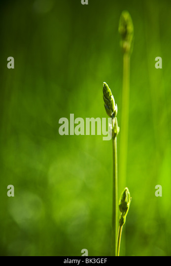 green grass background with selective focus - Stock-Bilder