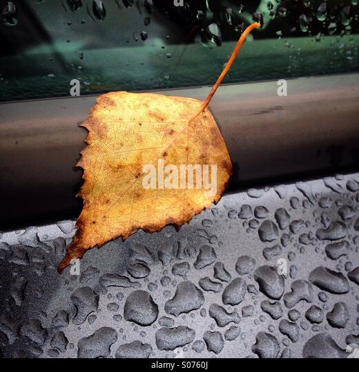 An autumn leaf on a rainy car window - Stock Image