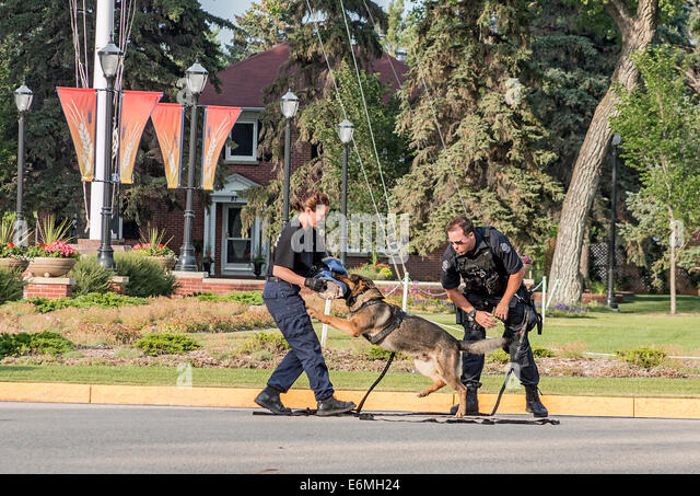 Police dog handling demonstration where the dog subdues a suspect at the Sunset-Retreat Ceremony at RCMP academy, - Stock Image