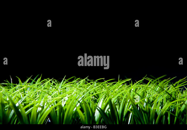Grass and black background - Stock Image