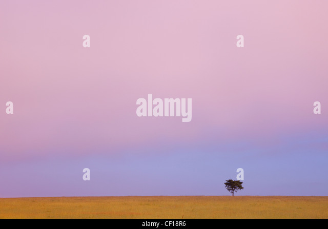A Lone Tree Against The Horizon At Sunset; Kenya - Stock Image