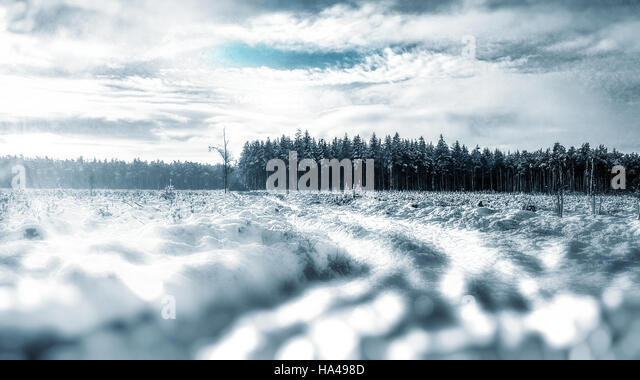 amazing winter landscape in forest - Stock Image