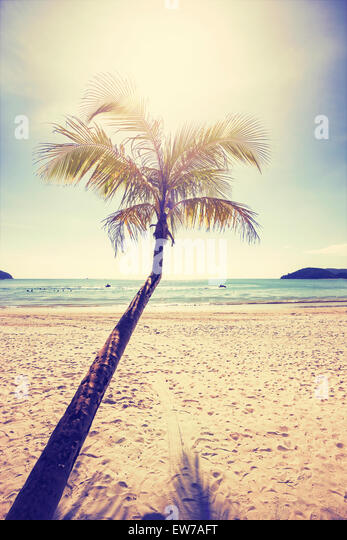 Vintage stylized tropical beach with palm tree at sunset. - Stock-Bilder