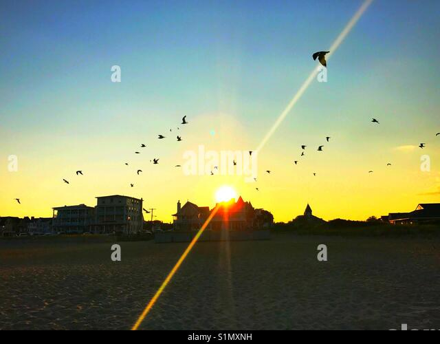 Sunset at beach with seagulls at Ocean Grove Jersey shore - Stock Image