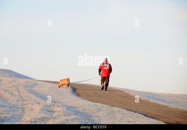 Dog walker, Frost scene in winter, England - Stock Image