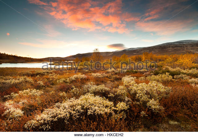 Fall colors and sunrise at Dovrefjell, Norway. - Stock-Bilder