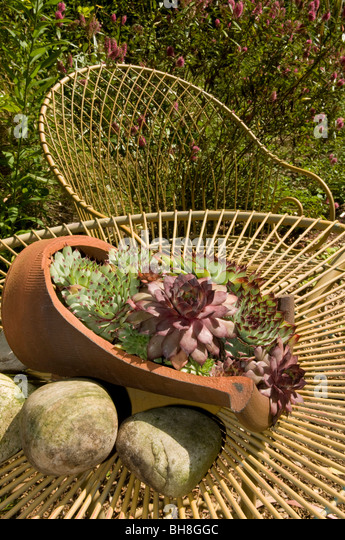Structural plants stock photos structural plants stock for Structural plants for small gardens