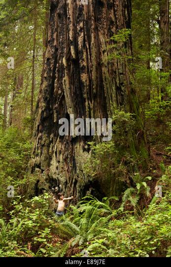 Boy standing in front of giant redwood tree - Stock-Bilder