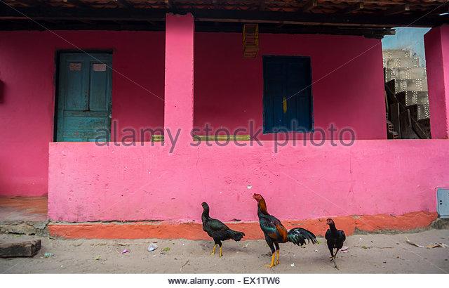 Pink house Morro de sao paulo Brazil south america - Stock Image