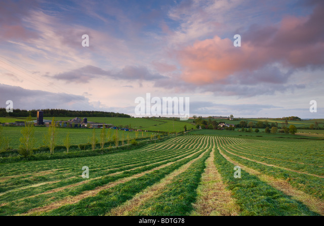 Freshly cut grass in a rural Devonshire field, Morchard Bishop, Devon, England. Spring (May) 2009 - Stock Image