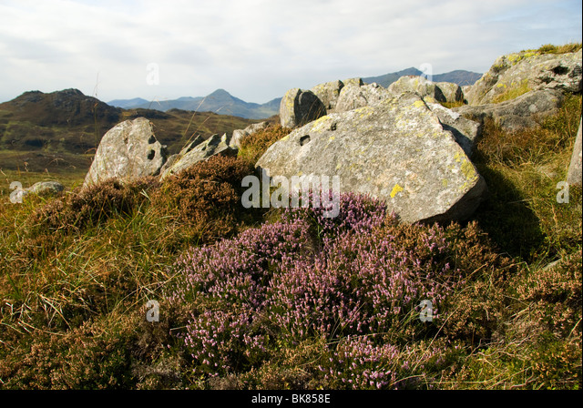 Yr Aran in the Snowdon group, from Yr Arddu in the Moelwyn hills, Snowdonia, North Wales, UK - Stock Image