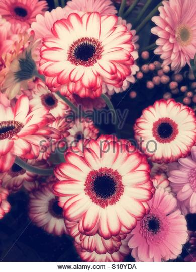 Gerbera Daisy Bouquet - Stock Image
