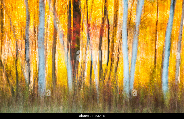 A creative abstract of backlit fall colored trees in Northern Michigan, United States. - Stock Image