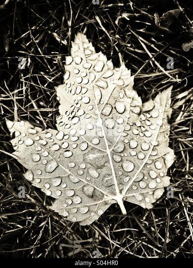 Dew drops on leaf - Stock Image