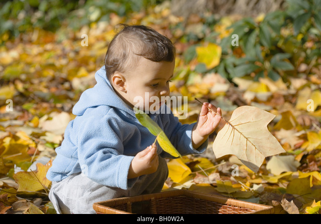 Child playing with autumn foliage, Muenchen, Bavaria, Germany - Stock-Bilder