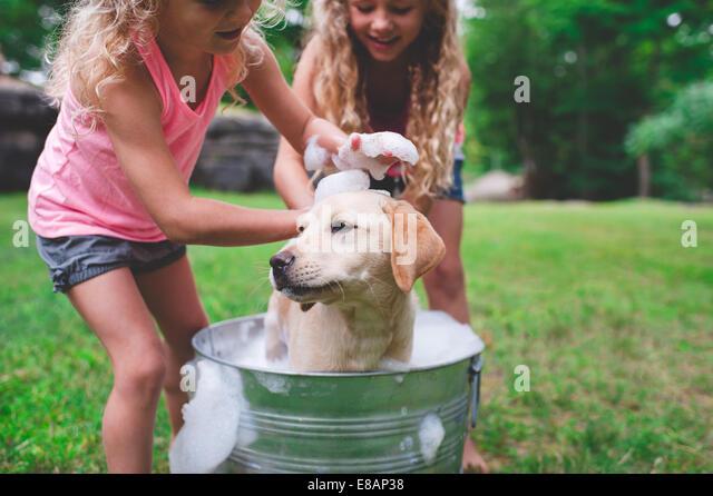 Two sisters bathing pet Labrador Retriever puppy - Stock-Bilder