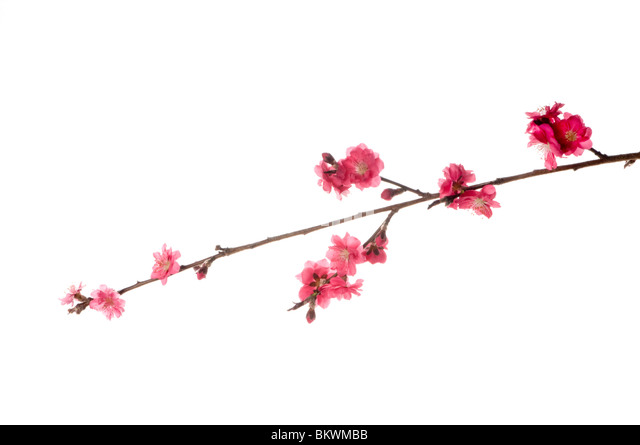 spring flowers - Stock Image