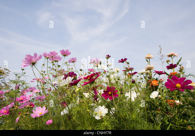 Colourful flowers - Stock Image