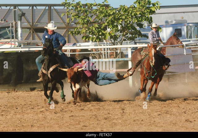 Cowboy Roping Calf Stock Photos Amp Cowboy Roping Calf Stock