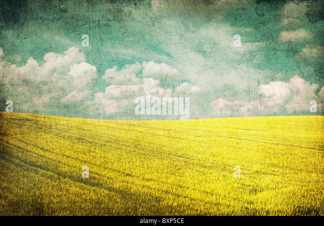 grunge background image of yellow field and blue sky - Stock Image