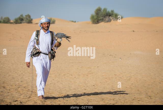Arab man walking in a desert near Dubai with peregrine falcon on his hand - Stock Image