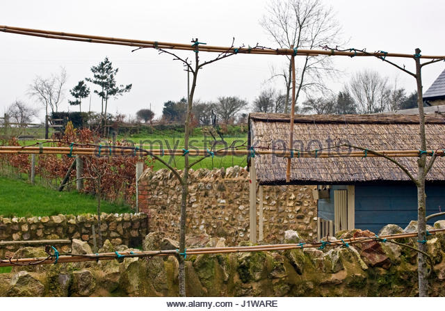 Pleached Stock Photos Pleached Stock Images Alamy