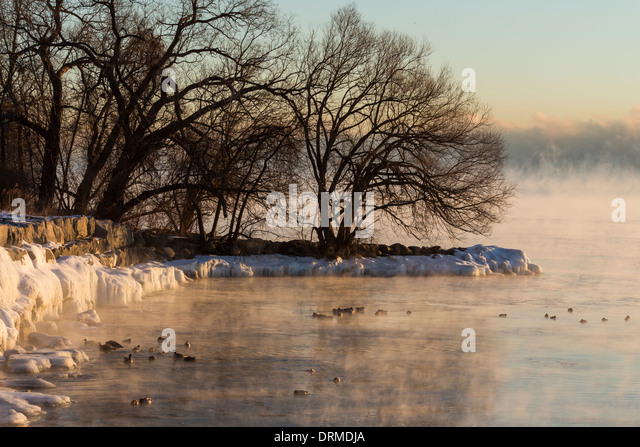 Ducks, geese and other waterfowl bath along the steaming and partially frozen Lake Ontario shoreline in extreme - Stock Image