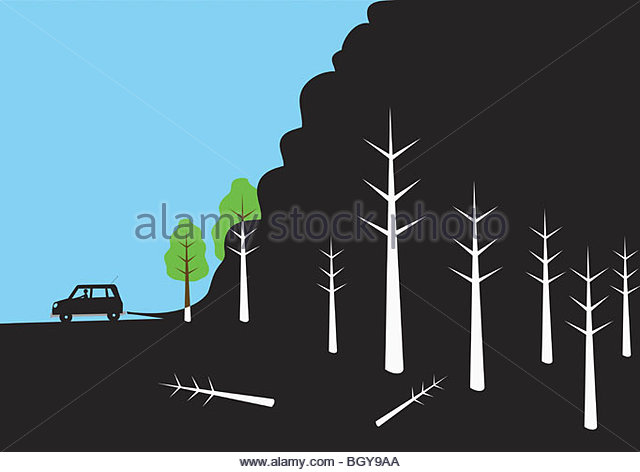 Car parking near woods - Stock Image