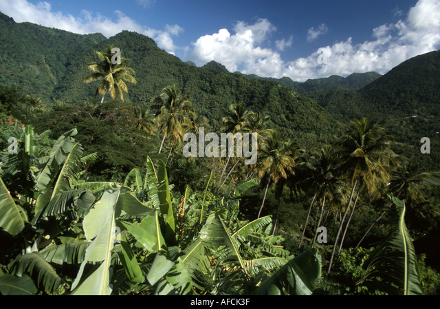 St. Lucia West Indies Mount Gimie Range tropical rainforest - Stock Image