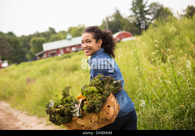 Working on an organic farm. A woman carrying a basket overflowing with fresh green vegetables, produce freshly picked. - Stock Image