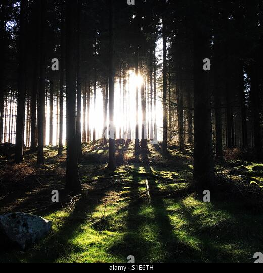 Forest at springtime - Stock-Bilder