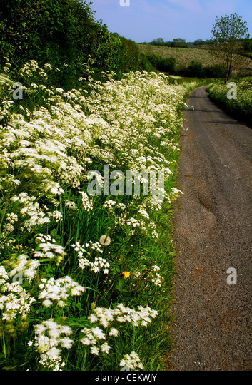 Country Road & Wildflowers, Co Armagh, Ireland - Stock Image