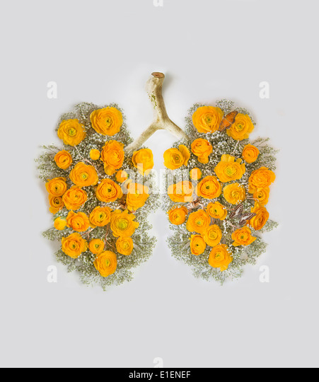 clean lungs with yellow flowers - Stock Image