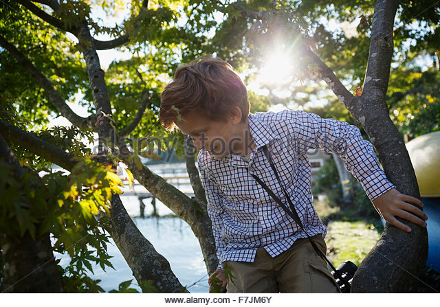 Boy climbing tree - Stock Image