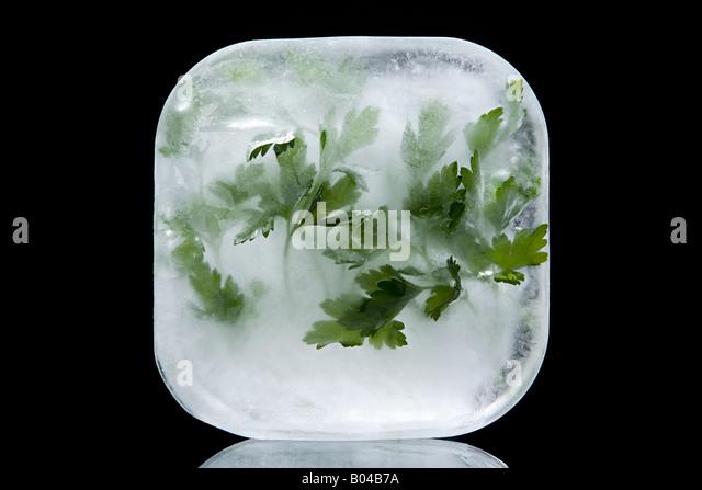 Frozen parsley - Stock Image