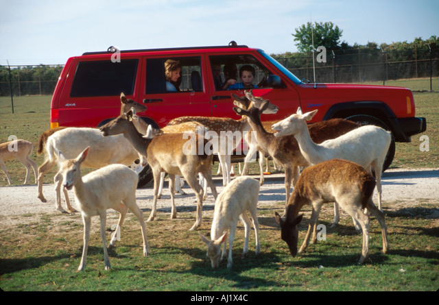 Ohio Ottawa County African Safari Wildlife Park visitors feed exotic animals from vehicles - Stock Image