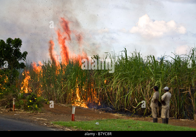 Sugar cane field controlled fire Mauritius Africa - Stock Image