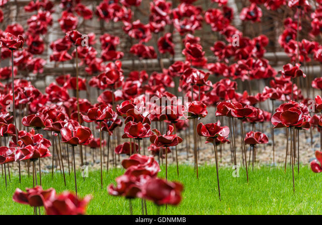 A field of poppies at the Weeping Window display at the Black Watch Museum in Perth Scotland - Stock Image